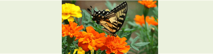 Orange and yellow flowers and butterflies